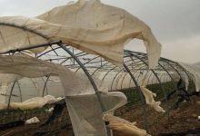 الرياح تلحق أضرارا كبيرة بالمزروعات في الأغوار الوسطى- (الغد)