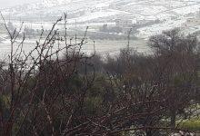 مشهد من الثلوج في عجلون اليوم- (الغد)