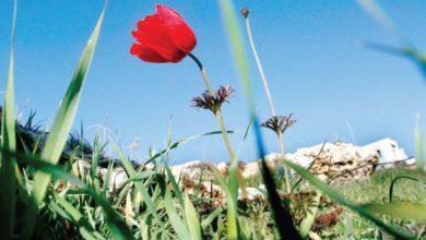 الأجواء الربيعية في الأردن -(الغد)
