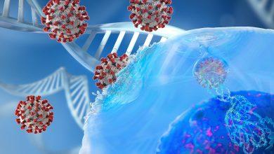 فيروس كورونا الجديد، المسبب لمرض كوفيد-19، يمكن أن يصب شخصا بالفيروس مجددا خلال 6 أشهر