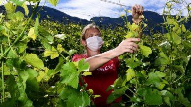 تتحمل النساء بشكل غير متناسب عبء وباء فيروس كورونا. فهل يمكن أن يعيد مرض كوفيد-19 الزمن إلى الوراء بالنسبة إلى عمل المرأة؟.
